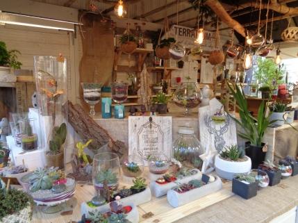 Mini jardins et terrariums à Nantes